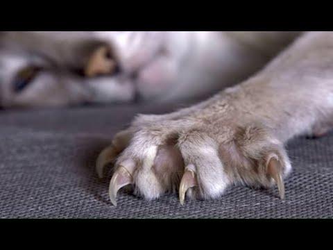Как отучить кошку драть обои, кошки могут драть обои потому что...