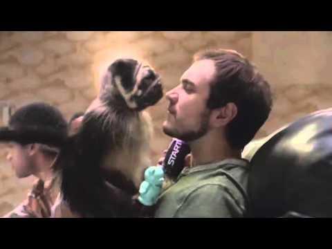 Puppy Monkey Baby Sparta Remix