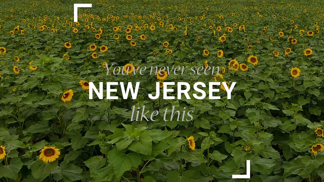 Sunflower Maze - Home