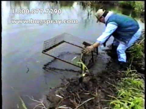 Beaver trap set on dam