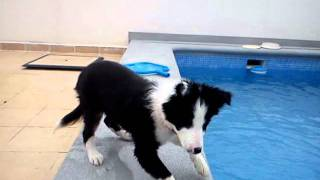 Border collie fun with water