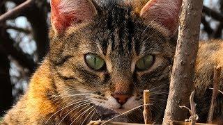 cute cat with big eyes. красивая кошка с большими глазами.