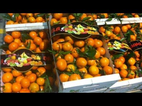 Результат прививки мандарина почкой, с веток магазинных плодов.