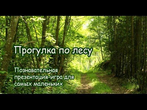 Прогулка по лесу. Развивающая презентация-игра для самых маленьких