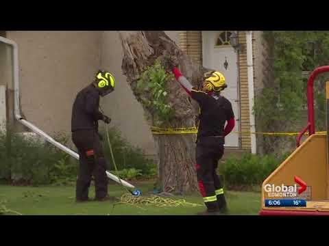Tree Ninja  - Global News - Windstorm Response Team in Bruderheim