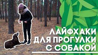 Лайфхаки для прогулки с собакой