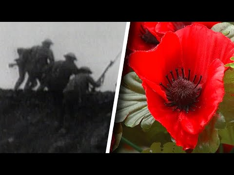 What Is Remembrance Day And Why Is The Poppy Its Symbol?