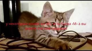 Очень маленькое видео извините меня!!!(факт о кошек с буквой ‹М› к стати кот рыжий который мой не 1)