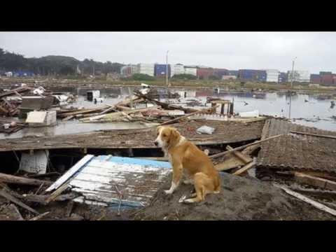 ¿Qué hacer con los animales en caso de catástrofe?