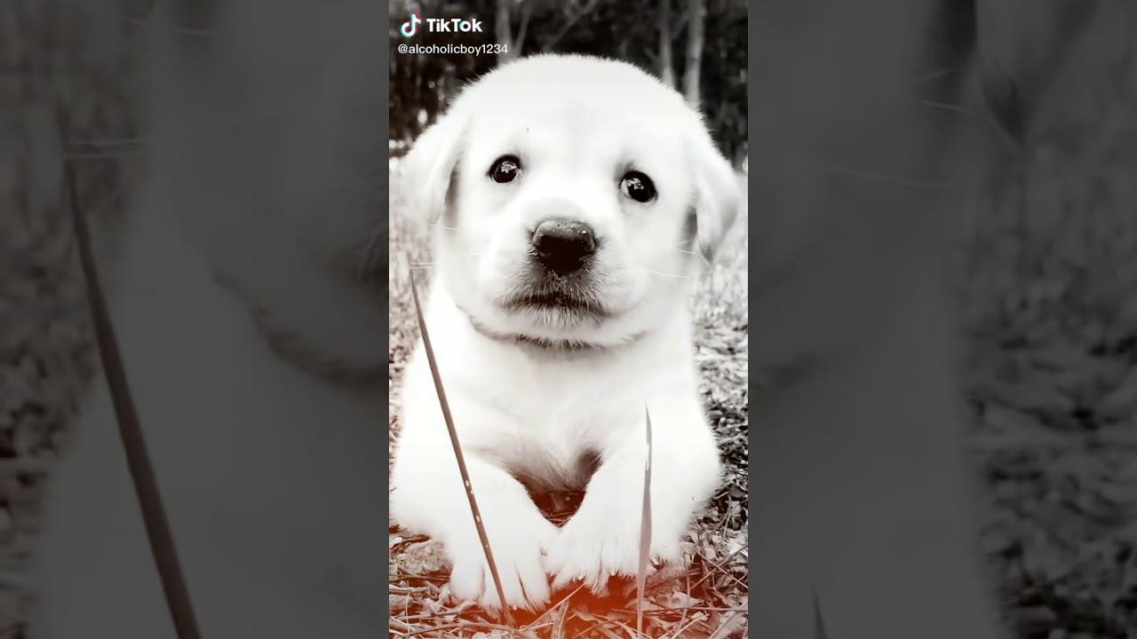 Nice and cute dog WhatsApp status | Suresh babu Videos