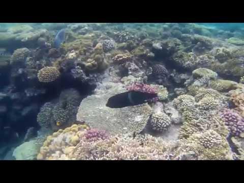 Красное Море / Red Sea
