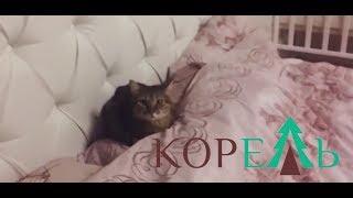 Кровать и комод на заказ  - Обзор кровати (Барнаул)