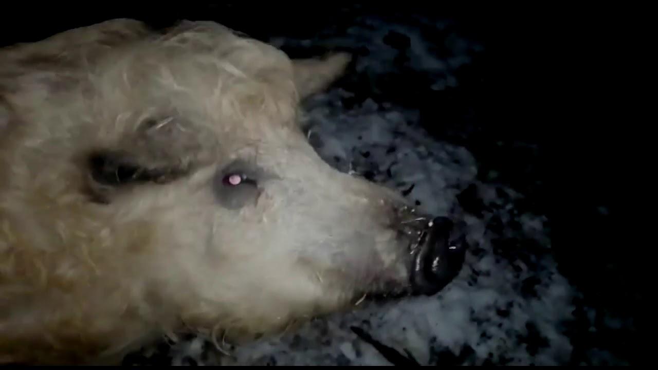 Unsere Schweine bei Nacht ❤️