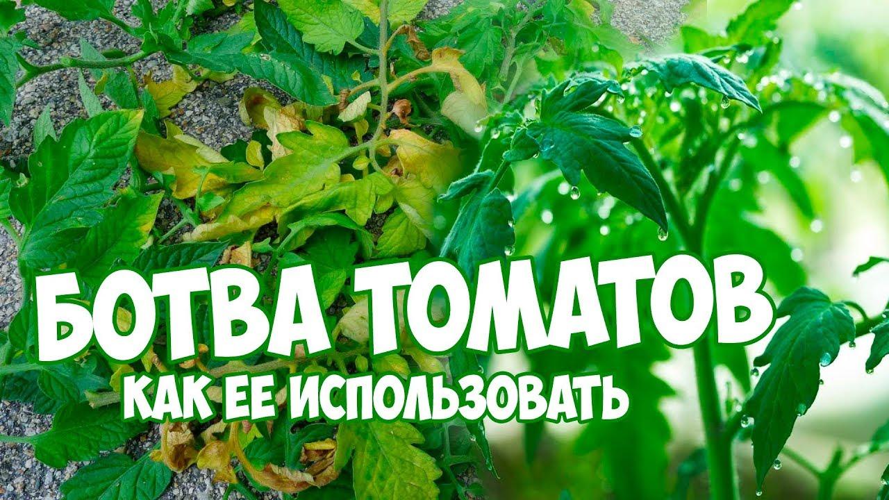 Что делать с ботвой томатов?