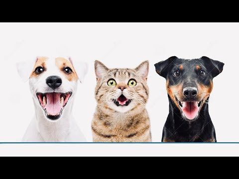 Funniest 🐶 Dogs and 😻 Cats – Awesome Funny Pet Animals Videos 😇