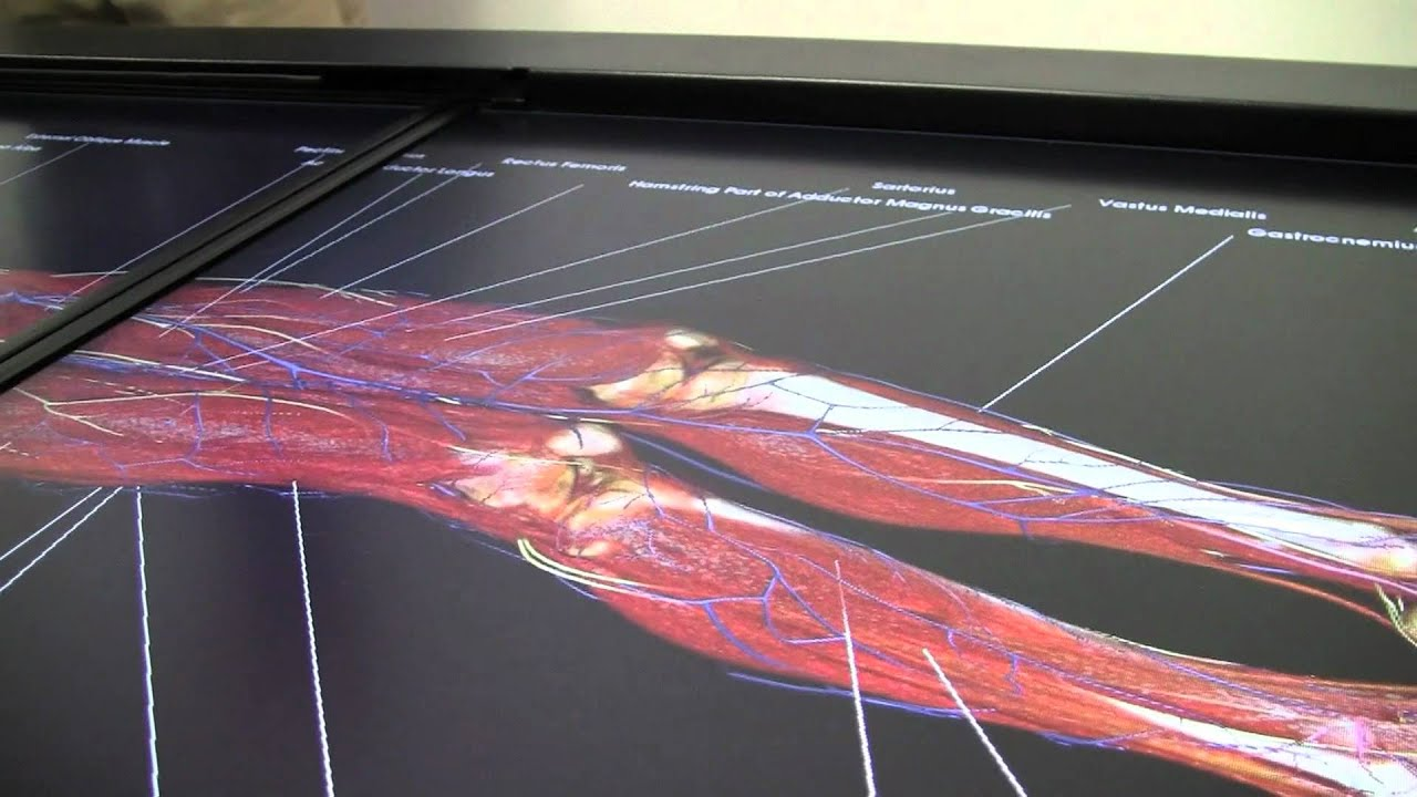 Teaching Anatomy In The 21st Century Youtube