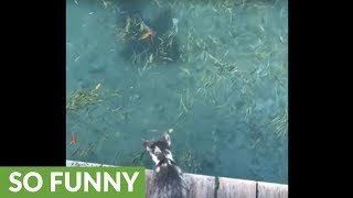 Cat wants to make contact with sharks