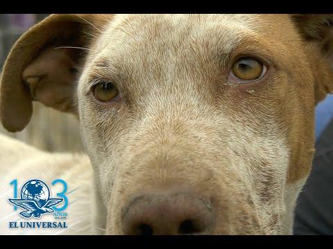 ¿Cómo adoptar a un perro peregrino?