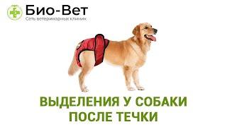 Выделения у собаки после течки. Ветеринарная клиника Био-Вет.