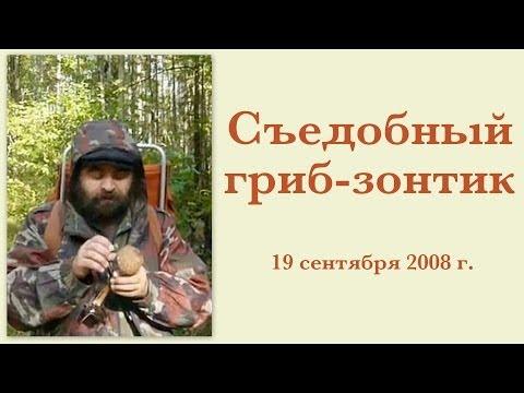 Большая Энциклопедия Грибов (iPhone версия)