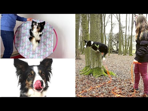 3 Hundetricks in 3 Minuten lernen    Tricktutorial Ep.#4