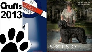 Westminster 'best Of Breed'  Winner Seiso  - Briard Breed  -  Crufts 2013