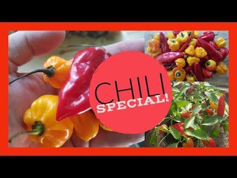 Garden Tour xxx Chili Special Update xxx No1 May 2018 thumbnail