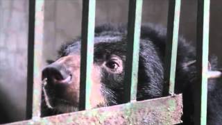 The Desperate Plight of Captive Wildlife in Vietnam