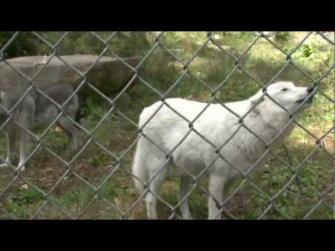 New York Wolf Sanctuary and Conservation Center