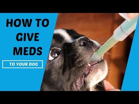 How To Give A Stubborn Dog Liquid Medicine