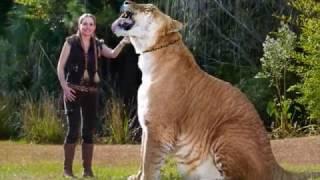 Топ 10 най-големите животни в света