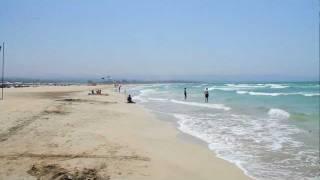 Jellyfish Caught Along Tyre Beach Lebanon  17-7-2011