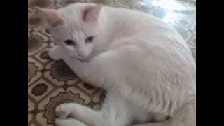 Коты бывают фотогеничны варинт 3