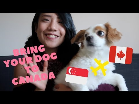 How Do You Bring Your Dog To Canada?