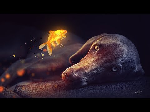 Glowing Goldfish Photo Manipulation Effect Photoshop Tutorial