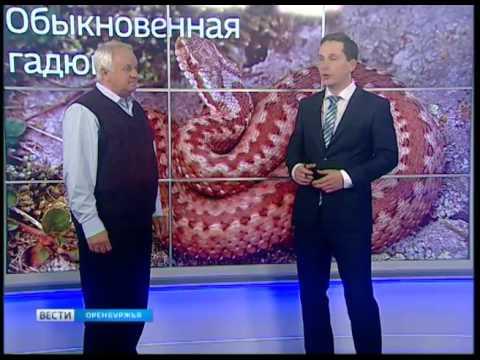 знакомства в оренбурской области орск