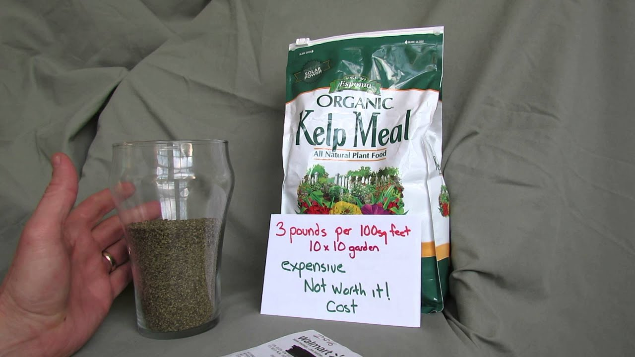 MFG 2016: Kelp Meal for Vegetable Gardens: What Is It, How Do I Use It, Do  I Need It?
