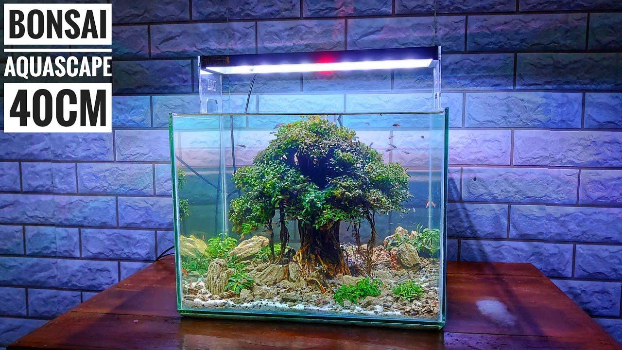 #161 Membuat bonsai mini untuk Aquascape model beringin ...