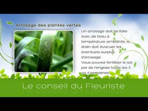 arrosageplantes vertes- Vidngo