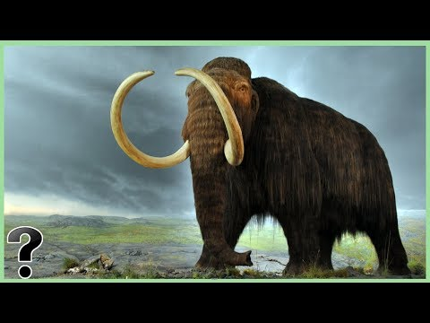 What If Woolly Mammoth's Didn't Go Extinct?