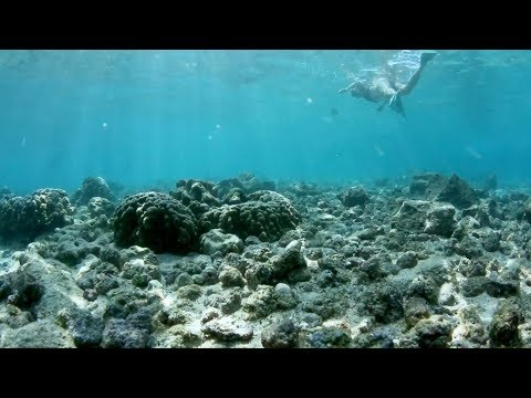 Reefs At Risk - What's in your sunscreen?