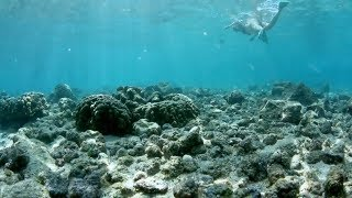 Reefs At Risk - is your sunscreen killing the reef?