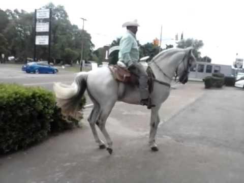 Andalusian Horse Dancing