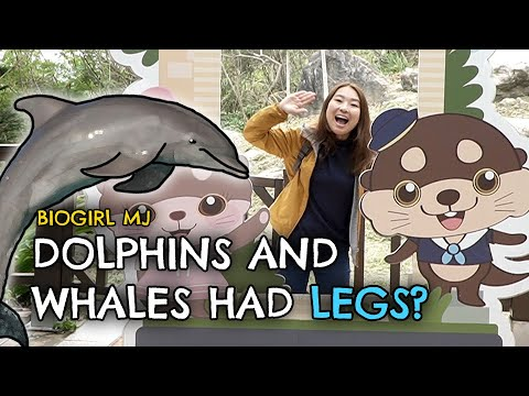 What to see at Farglory Ocean Park (Taiwan)   Exploring with MJ