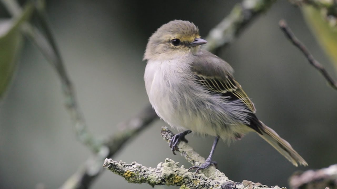 Protecting Birds Is Protecting Our Future