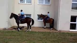 Rencontres de la sécurité à La Flèche : les gendarmes interviennent... à cheval