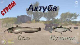 Русская Рыбалка 4 Ахтуба Сом и пузанок стрим Jurassic2