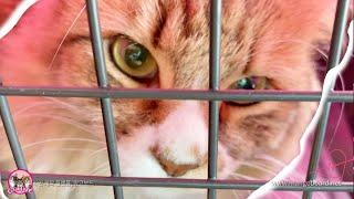 [FLUTD] 고양이 방광염으로 체리가 병워…