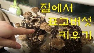 집에서 표고버섯 키우기 (배지재배)