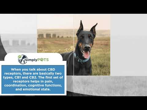 best-cbd-oil-for-dogs-–-top-rated-cannabis-hemp-oil-for-2019